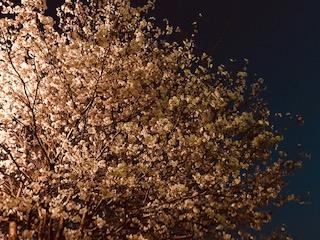 26日夜.png